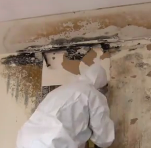 best mold remover for walls