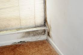 Mold Remediation Columbus Ohio – Details About Best Services