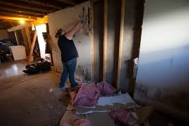Mold Remediation Indianapolis – Exploration and Detailed Information
