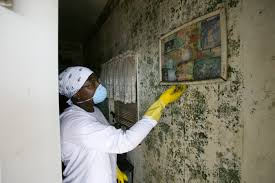 Mold Remediation NJ: Details of Remedy and Services