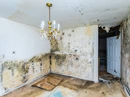 Water Damage Naples : Everything you need to know