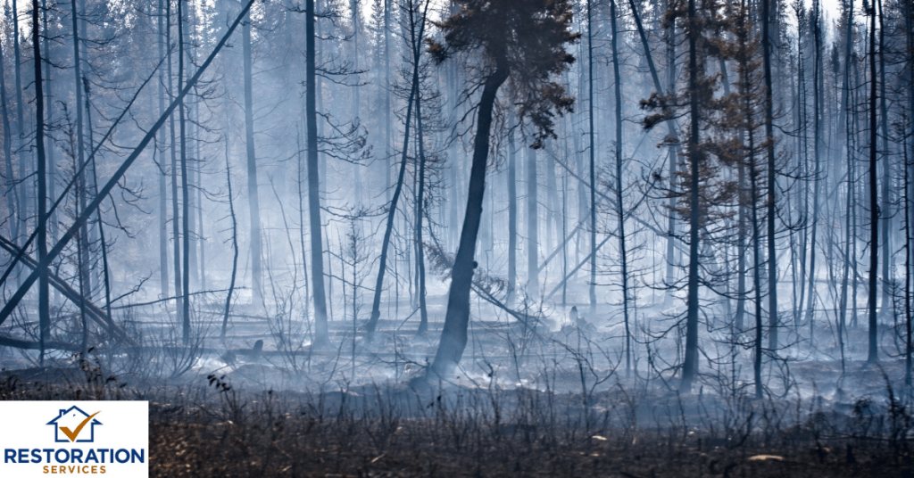 Smoke damage cleaning companies
