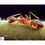Carpenter Ants : Identification and information about Best Services