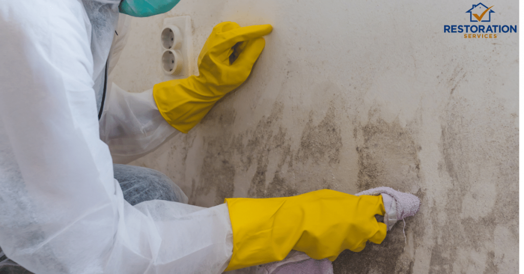 Mold Remediation Companies CT