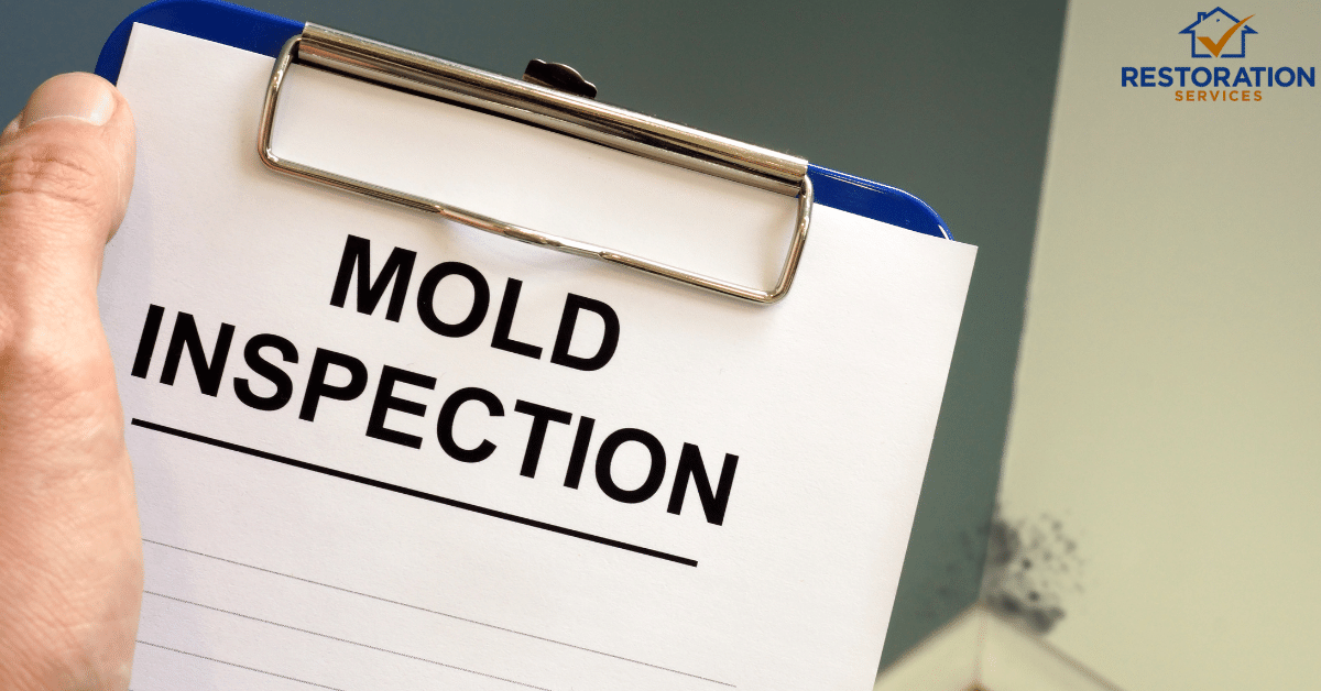 Mold Inspection  – Every Detail About The  Process you Must know