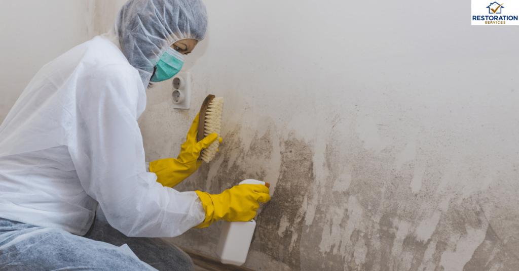 Mold Remediation Companies Columbus Ohio