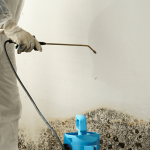 Mold Removal : How to keep your home healthy and safe?