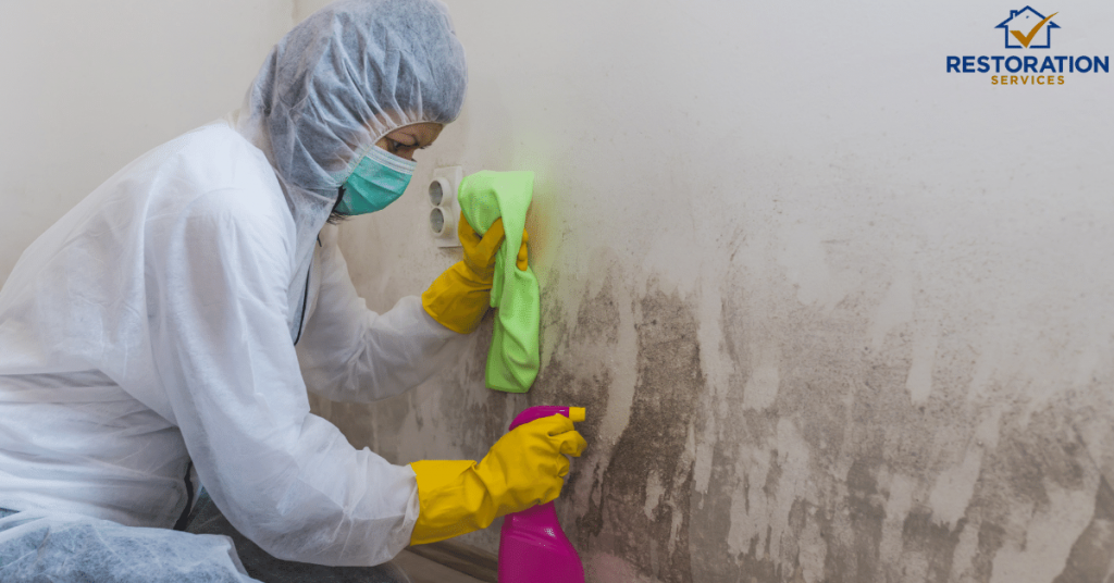 Mold Removal Specialist