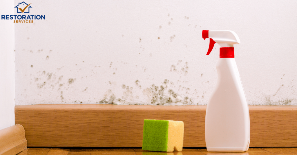 Home Mold Removal Service