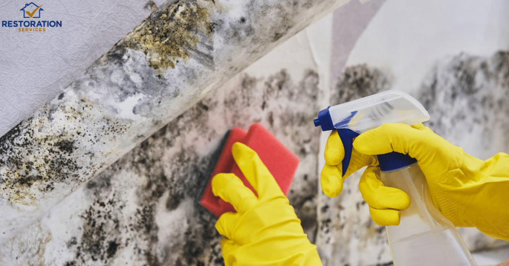 How To Get Rid Of Mold On Wood In Basement