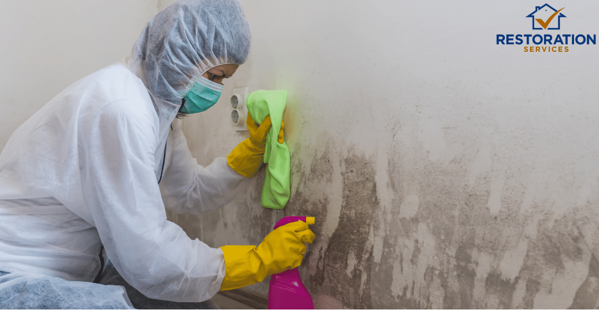 How to Remove Mold – Detailed Analysis and Information