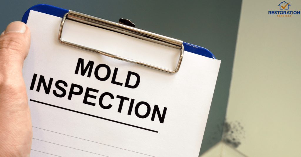 Mold Inspection and Testing Cost