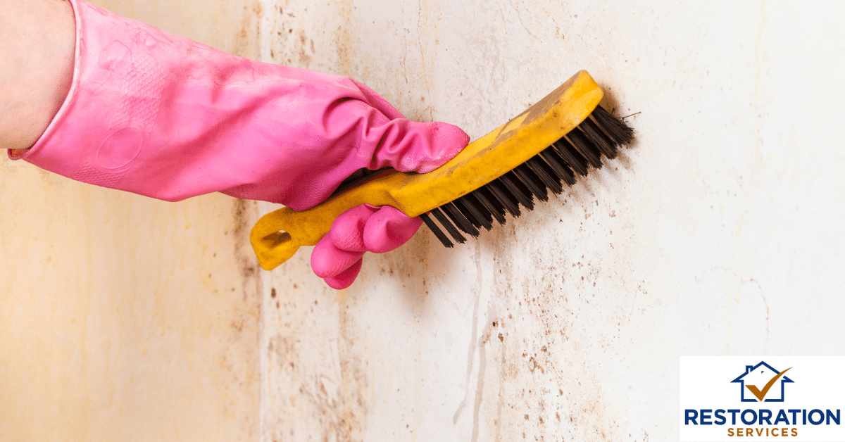 Mold remediation cost – Can you clean up on your own?