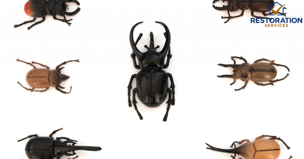 Types of Beetles