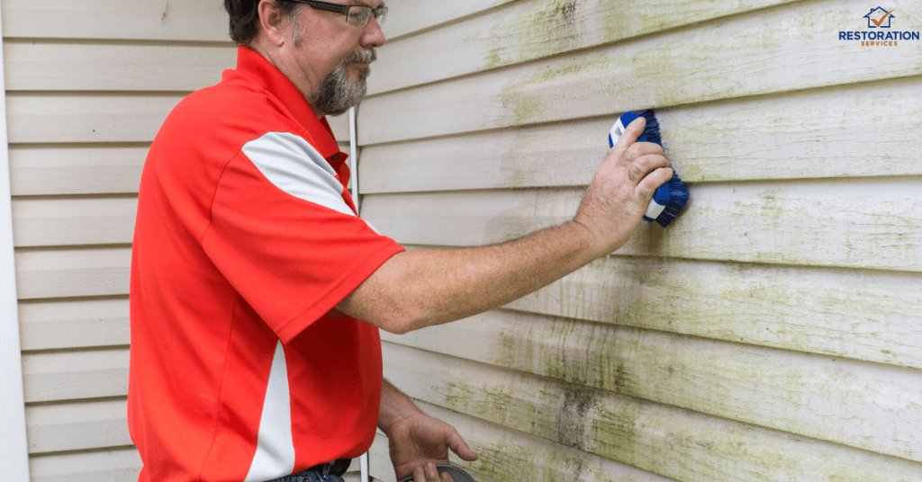 Cost Of Mold Removal