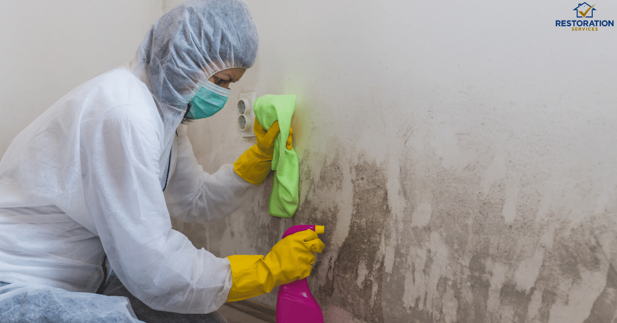 Mold Removal Cost – Everything Else You Need To Know