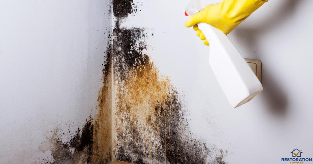 Mold Removal Cost Attic