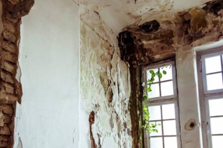 Mold damages